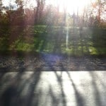 Light-through-trees-mom-got-blog