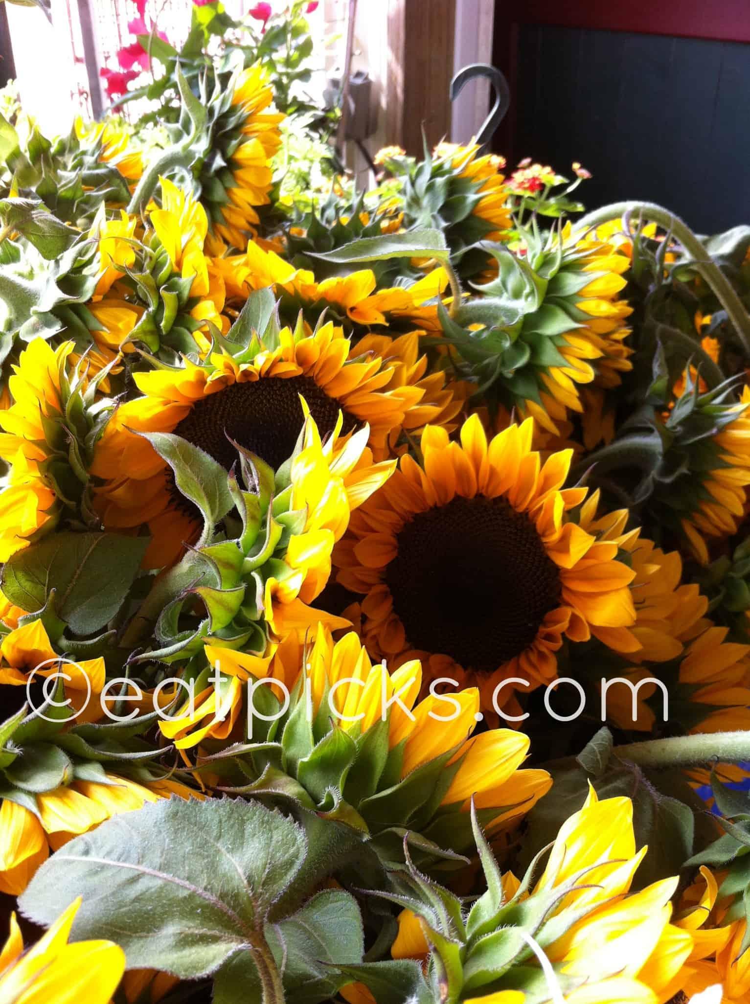 VaBeach6-sunflowers-baybreezefarm-eatpicks.com-2012 102
