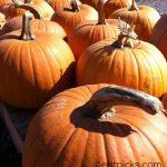 Happy Halloween 48 Times