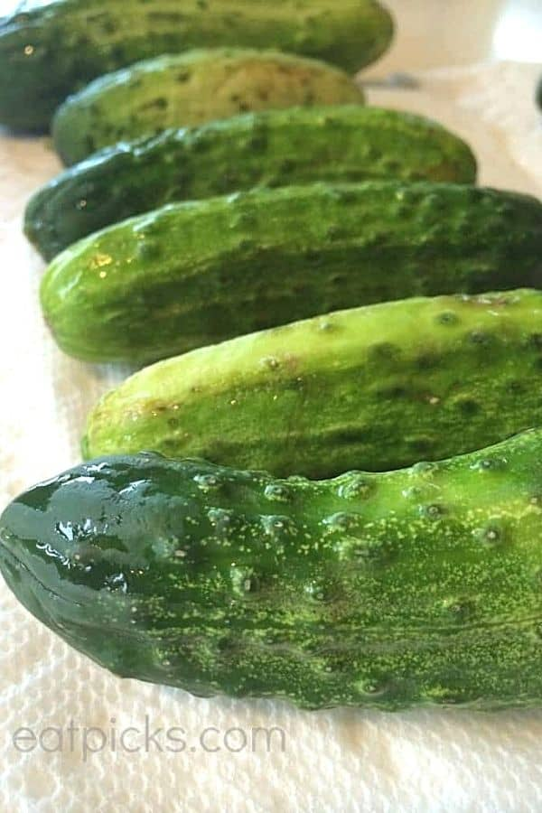 kirby cucumbers for refrigerator pickles