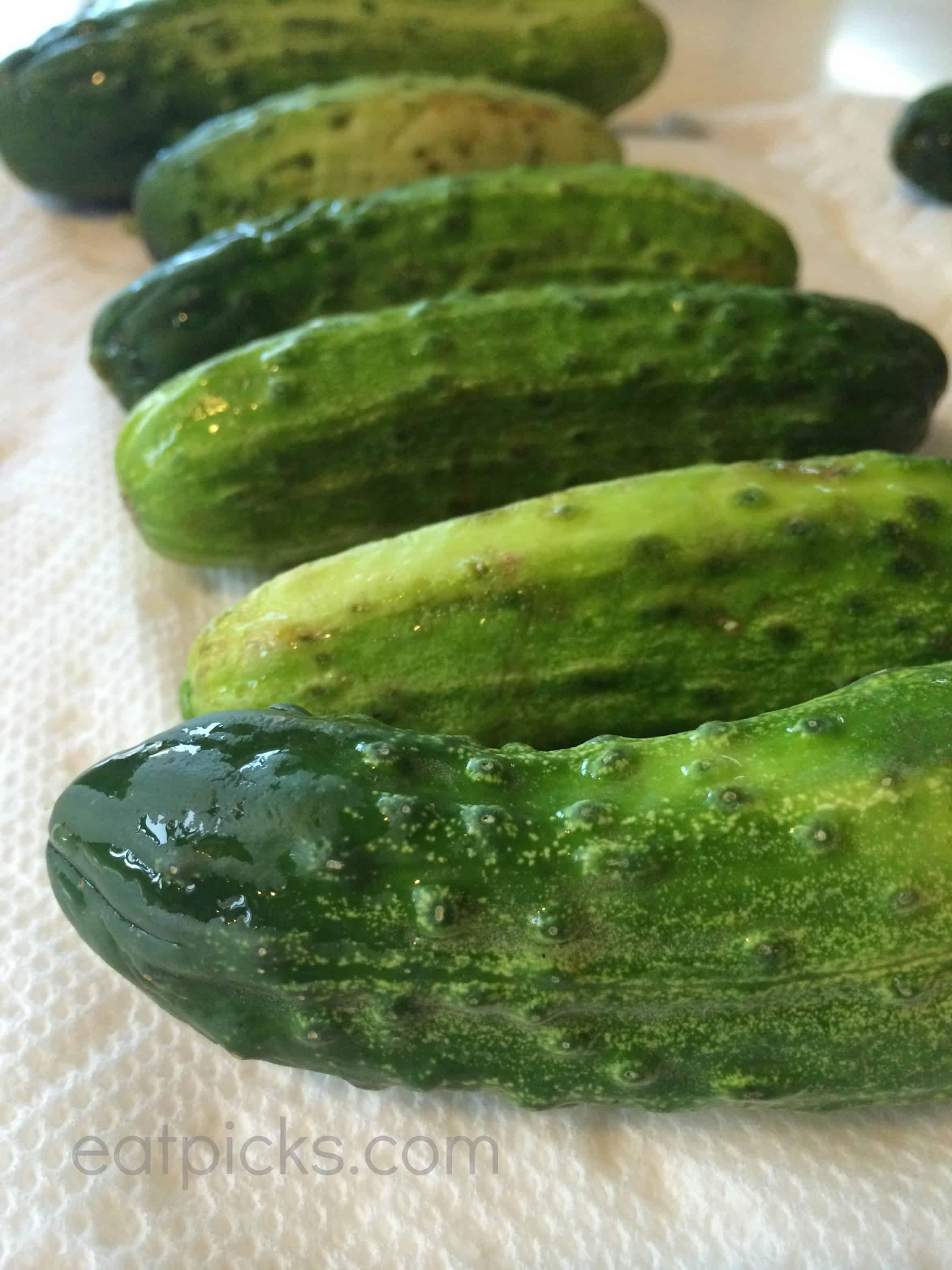 kirby cucumbers garlic dill pickles eatpicks
