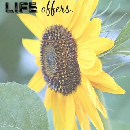 savor each moment life offers