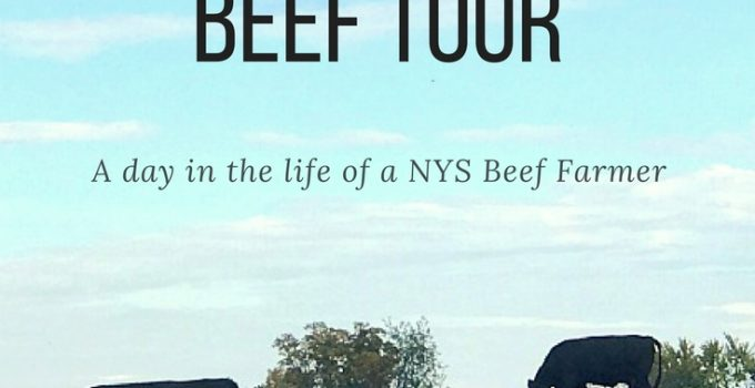 Ameele Farms Popular Highlight of NYS Beef Tour