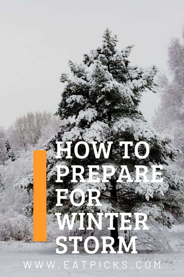 How to Prepare for Winter Storm Guide with evergreen tree