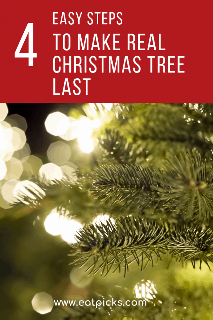 4 steps to make your real christmas tree last longer. Enjoy your real tree all season long! #Christmastree #holiday #christmas