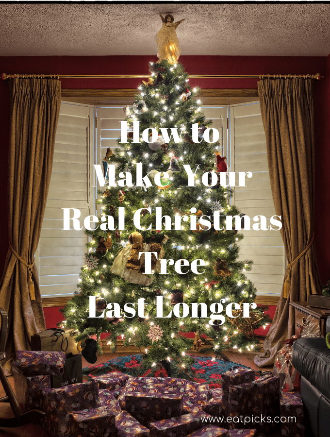 Real Christmas Tree takes a little care, but can last long through the season with 4 easy steps. #RealChristmasTree #holidayseason