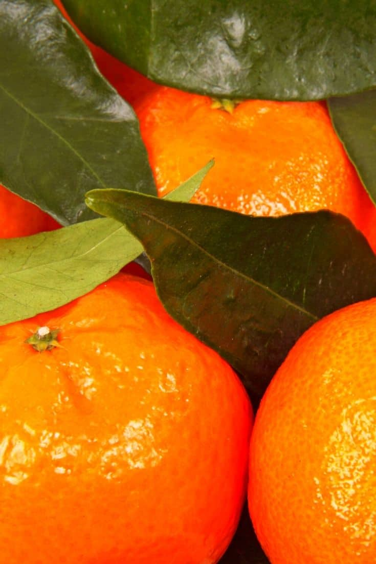 Clementine oranges with leaves
